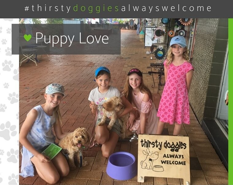 Thirsty Doggies Always Welcome at Kylie Scott Real Estate - Cleveland QLD
